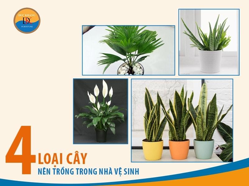 4 Loại cây nên trồng trong nhà vệ sinh