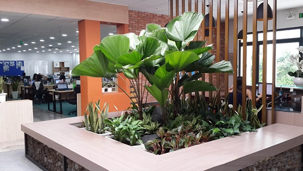Nên trồng thêm cây xanh trong văn phòng