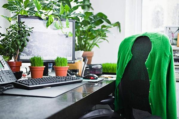 Cầu tài lộc nên đặt cây phong thủy trên bàn làm việc